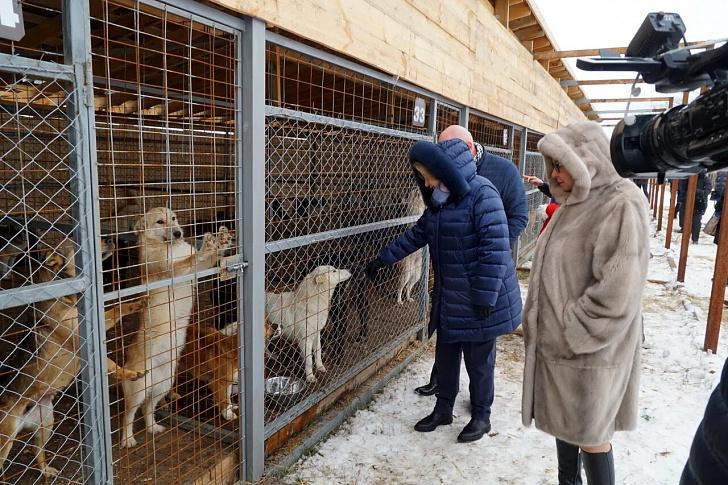 Парламентарии проверят исполнение закона о защите животных