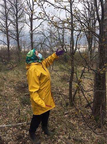 Экосовет держит на контроле ситуацию в сфере охраны и защиты лесных насаждений