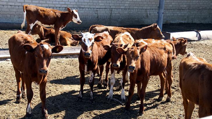 В ходе межпарламентского диалога рассмотрены правовые аспекты поддержки племенного животноводства